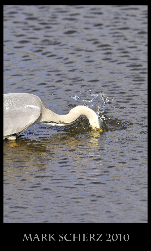 Striking a fish in Holyrood Park