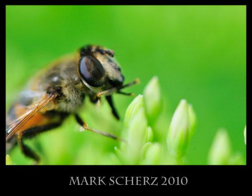 Hoverfly true macro