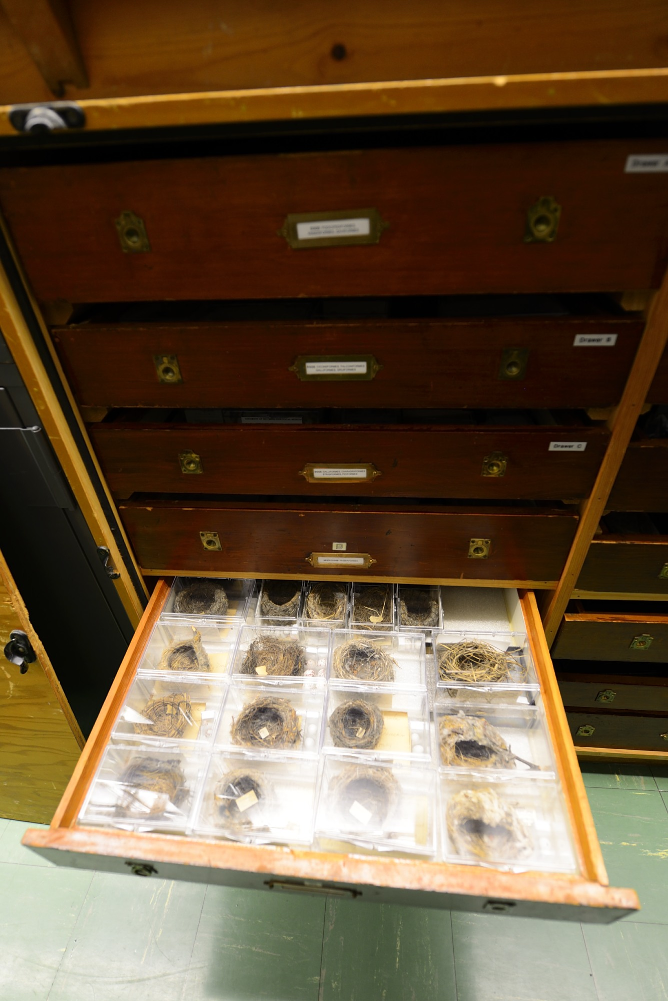 Nests in Boxes in Drawers